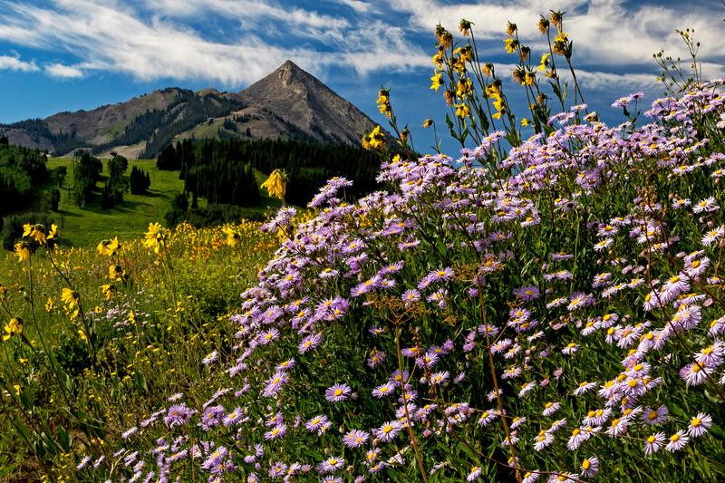CB Wildflowers 7