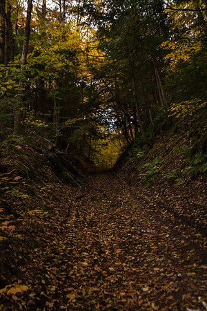 Trail into the Unknown Woods