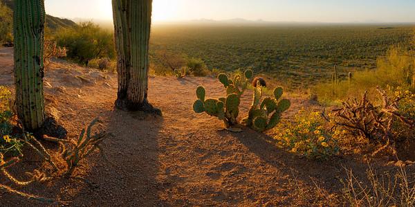 Sunset At Saguaro National Park #2