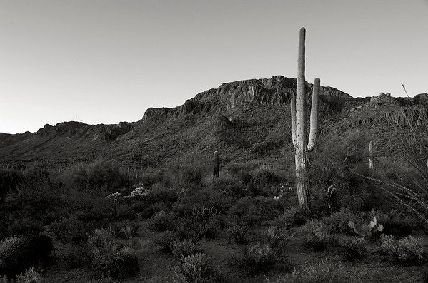 Sunset At Saguaro National Park #1