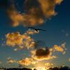 Gull To Sunset