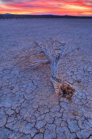 Branch on Rosamond Dry Lake