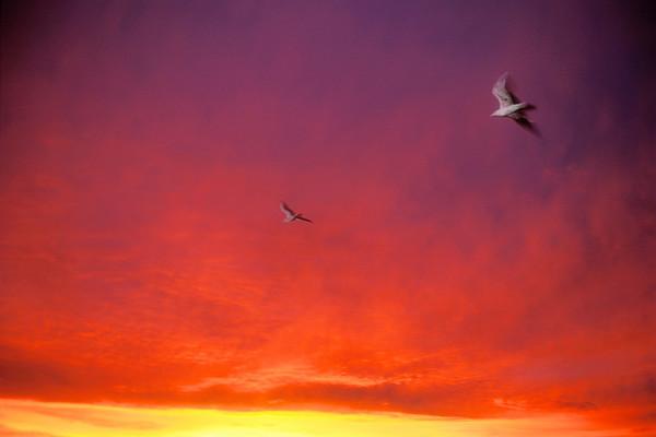 Gulls Into the Sunrise