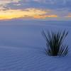 Whitesands Color