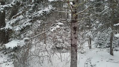 WP_Winter_Scenics_Brooklin_Snow_3_020118_JS