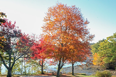 WP_fall_colors_tree_scene_111818_AB