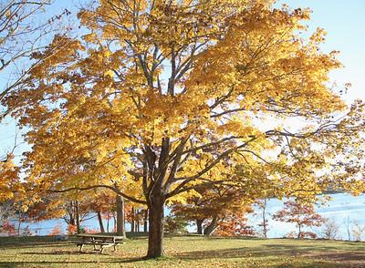 WP_storm_scenics_golden_tree_3_110818_AB