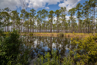 Okefenokee Preserve March 10, 2019-3