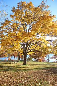WP_storm_scenics_gold_tree_2_110818_AB