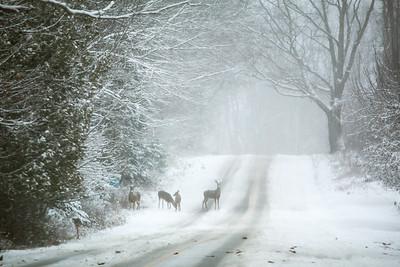 CP_first_snow_deer_112118_AB