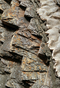 Layered limestones and shales tipped at 115 degrees, 500 million years old, Green Point, Gros Morne National Park, Newfoundland, Canada.