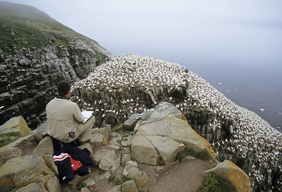 "Researcher observing Northern Gannets and other seabirds nesting on ""Bird Rock"", Cape St. Mary's Seabird Ecological Reserve, Newfoundland Canada"