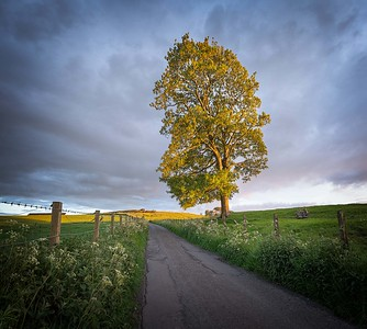 Country Road, Ayrshire, Scotland