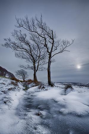Winter trees, Ayrshire, Scotland