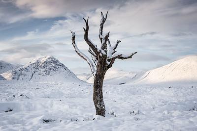 Skeleton tree, Glencoe, Scotland