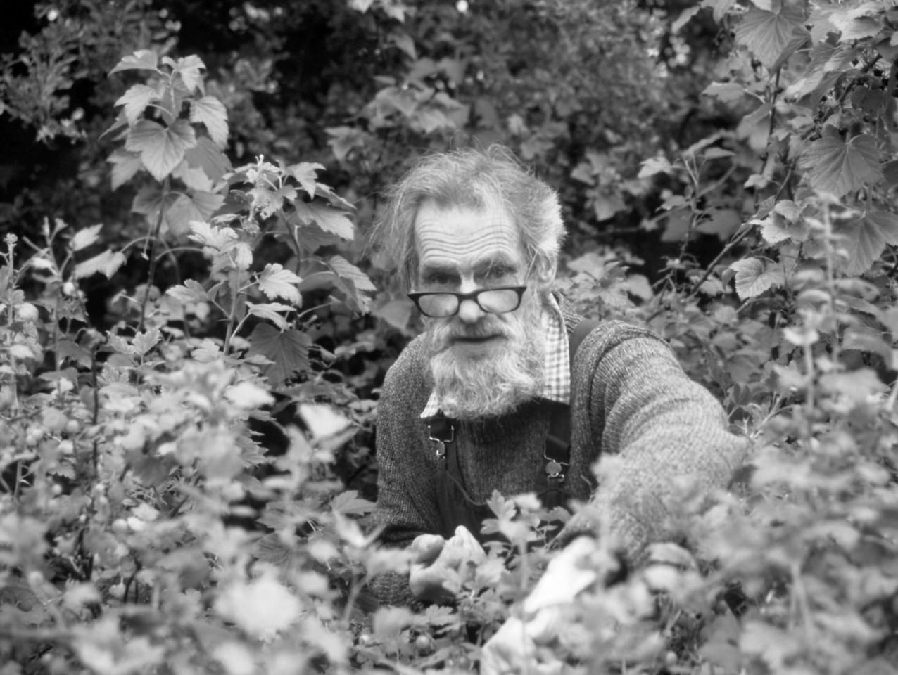 Gooseberry Picking, Skye