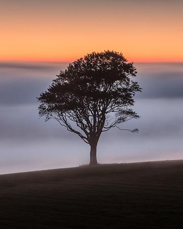 Tree against the mist, Ayrshire, Scotland