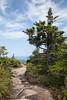 Acadia NP Cadillac Mountain IMG_2790