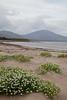 Fermoyle Strand, County Kerry, Ireland IMG_1033