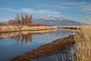 Alamosa NWR (Rio Grande River) IMG_3879