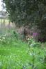 Ballyseedy Wood, Tralee, Ireland IMG_0885