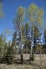 Million Reservoir, South Fork, CO IMG_0411