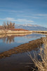 Alamosa NWR (Rio Grande River) IMG_3878