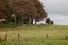 Ballyseedy Wood, Tralee, Ireland IMG_0889