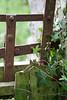 Ballyseedy Wood, Tralee, Ireland IMG_0884