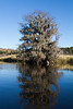 Edisto River IMG_1567