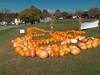 Pumpkins near Dalton, GA IMG_1613