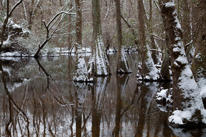 Edisto River at Aiken State Park IMG_1027
