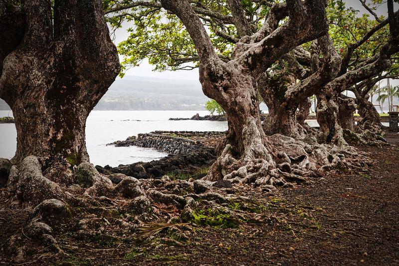 Liliuokalani Gardens near Hilo IMG_8396 rev 2