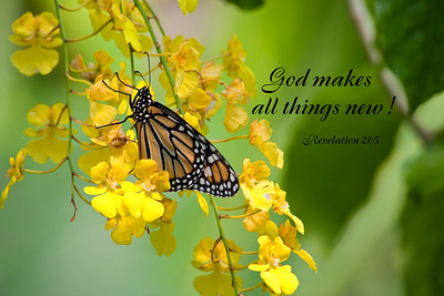 God makes all things new.