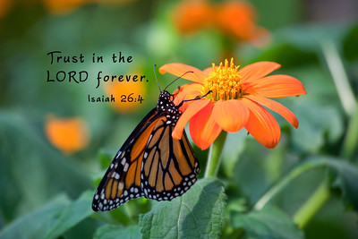 Trust in the LORD forever. Isaiah 26:4Monarch on orange zinnia