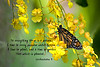 Monarch Butterfly with Ecclesiastes scripture