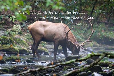 As the deer pants for water...