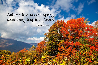 Autumn is a second spring where every leaf is a flower.  Albert CamusNorth Carolina mountain in autumn