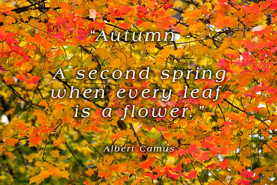 Autumn is a second spring where every leaf is a flower. Albert Camus