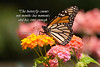 The butterfly counts not months but moments and has time enough