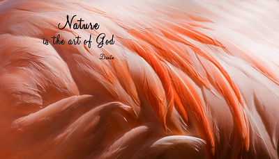Nature is the art of God. Dante
