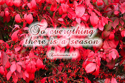 To everything there is a season - Ecclesiastes 3:1Red Dogwood Leaves