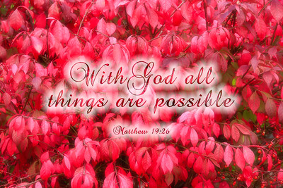 With God all things are possible - Matthew 19:26Red Dogwood Leaves
