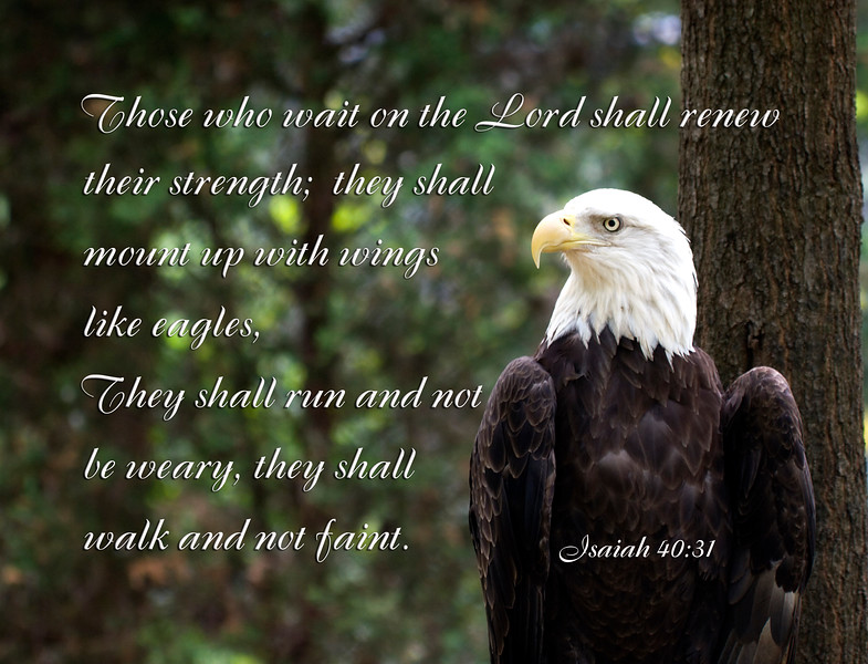 Bald Eagle with Isaiah Scripture