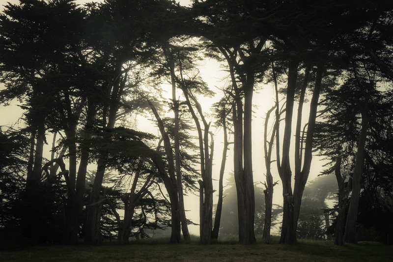 The Sea Ranch Glow