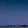 Moon Swans