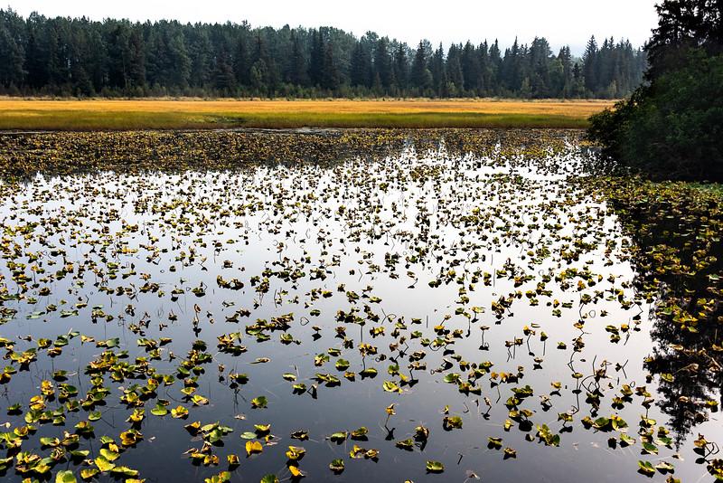 Alaskan Marsh