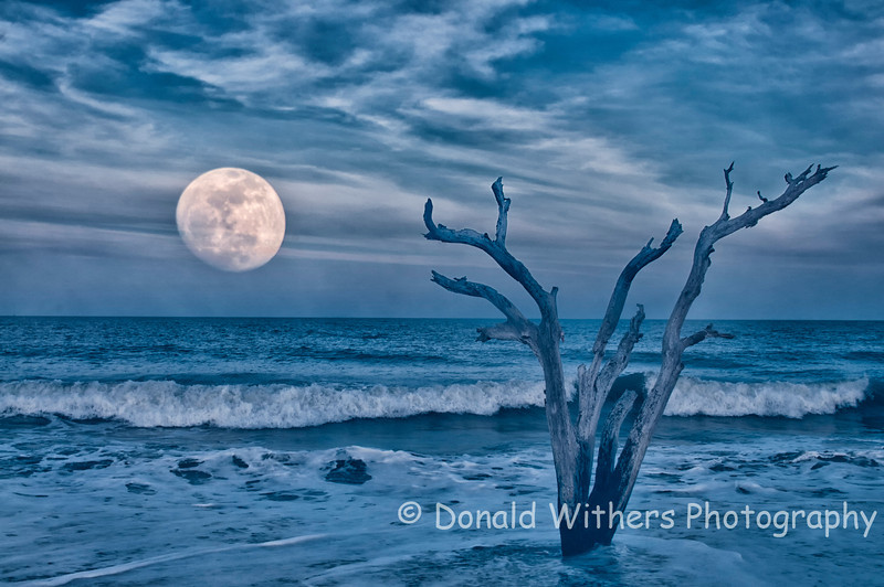Blue Moon | Selected as the 2013 Photo Contest Winner and photo on the 2013 DHEC-OCRM Tide Table Chart