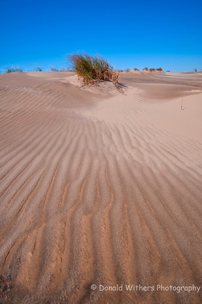 Sand Dunes | Jockey's Ridge, Nags Head