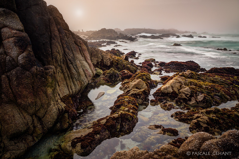 Tide pools in the mist